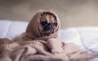 What Causes Insomnia? 15 Key Culprits